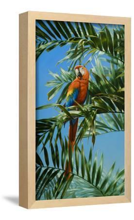 Scarlet Macaw 1 by Michael Jackson