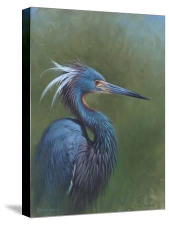Tricolour Egret