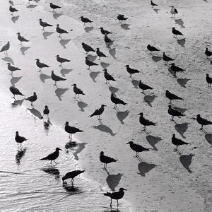 Escher's Seagulls by Michael Kahn