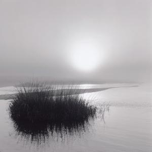 Fog over Katama by Michael Kahn