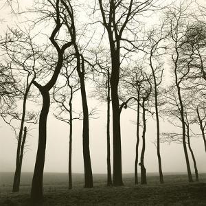 Tree Study I by Michael Kahn