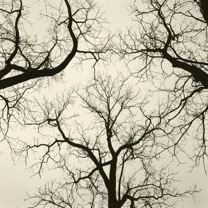 Tree Study V by Michael Kahn