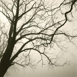 Tree Study VI by Michael Kahn