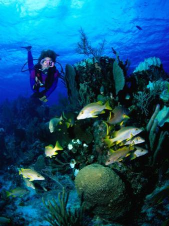A Diver Watches a Group of Schoolmasters Congregate Around One of the Cayman Reefs, Cayman Islands