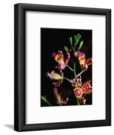 Detail of Orchid, Flowers Bay, Honduras