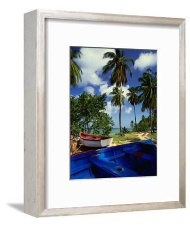 Wooden Fishing Boats Among Palm Trees, Pigeon Point, Trinidad & Tobago