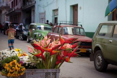 Fresh Flowers for Sale in Havana Vieja by Michael Lewis