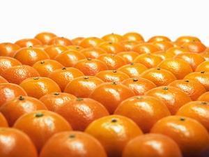 Mandarin Oranges in Rows by Michael Löffler