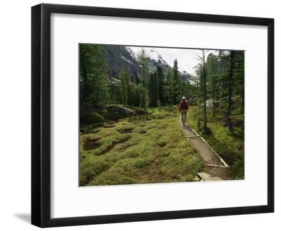 A Hiker Treks Along a Path in Yoho National Park