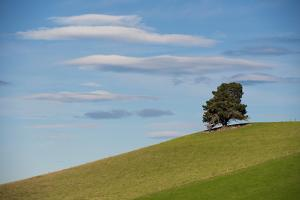 A Tree on the Crest of a Hill by Michael Melford
