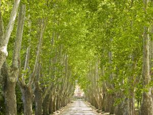 Alley of Trees Leading Up to a House in Aix En Provence by Michael Melford