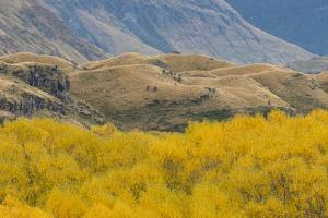 Autumn Colors Foliage of Cottonwood Trees in Mount Aspiring National Park by Michael Melford