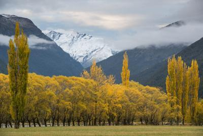 Cottonwoods and Willows in Autumn in the Matukituki River Valley by Michael Melford