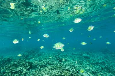 Fish Swimming in the Shallow Waters Off Palau by Michael Melford