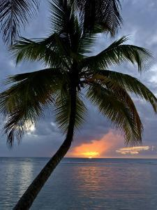 Palm Tree in Front of a Beautiful Sunset over the Water by Michael Melford