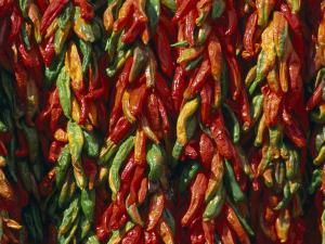 Rows of Red and Green Chili Peppers Hang Together in Bunches by Michael Melford