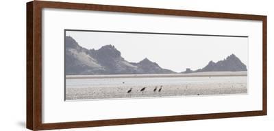 Shorebirds at Detwah Lagoon