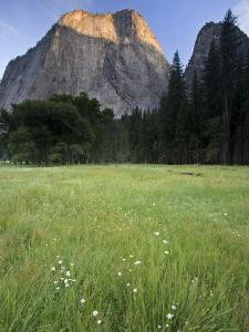 View of Cathedral Rocks and Meadow in Yosemite National Park by Michael Melford