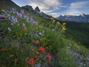 Wildflowers along Garden Wall trail from Logan Pass by Michael Melford