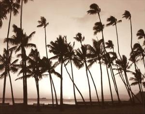Platinum Palms I by Michael Neubauer