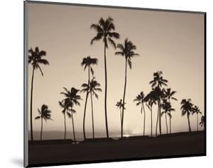 Platinum Palms II by Michael Neubauer