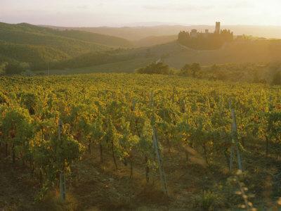 Vineyards and Ancient Monastery, Badia a Passignano, Greve, Chianti Classico, Tuscany, Italy
