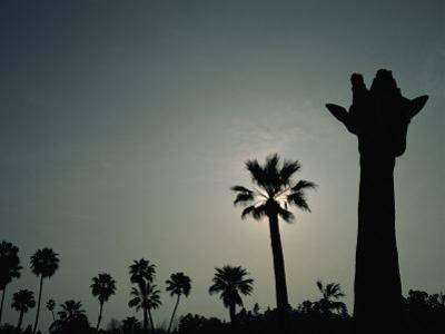 A Silhouette of a Giraffe at the San Diego Wild Animal Park by Michael Nichols