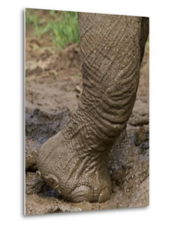 Elephant Foot in a Mud Puddle