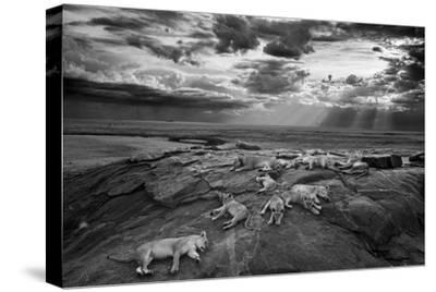 Lionesses and cubs from the Vumbi lion pride rest on a kopje, a rocky outcrop.