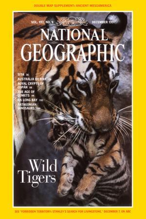 Mother Tiger Carrying Her Cub; Cover of 12-1997 Ng Magazine by Michael Nichols