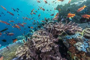 A Profusion of Coral and Reef Fish on Batu Bolong, Komodo Island National Park, Indonesia by Michael Nolan