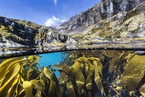 Above and Below Water View of Kelp in Hercules Bay, South Georgia, Polar Regions by Michael Nolan