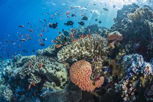 Profusion of hard and soft corals as well as reef fish at Batu Bolong, Komodo Nat'l Park, Indonesia by Michael Nolan