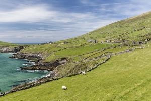 Sheep Fences and Rock Walls Along the Dingle Peninsula by Michael Nolan