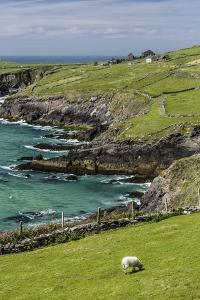 Sheep Fences and Rock Walls Along the Dingle Peninsula by Michael Nolan