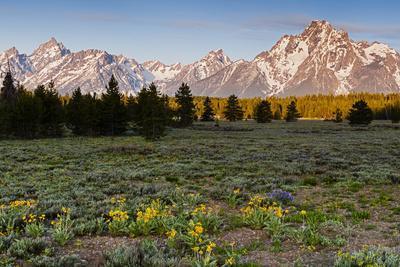 Morning in Pilgrim Creek Meadows, Grand Teton NP, Wyoming