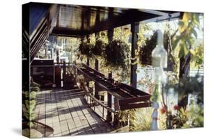 View of Hanging Plants on the Deck of a Floating Home, Sausalito, CA, 1971 by Michael Rougier