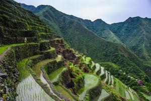 Batad Rice Terraces, World Heritage Site, Banaue, Luzon, Philippines by Michael Runkel