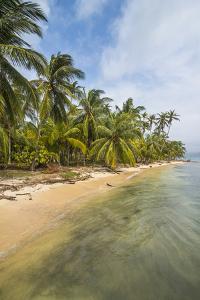 Beautiful palm fringed beach, Achutupu, San Blas Islands, Kuna Yala, Panama, Central America by Michael Runkel