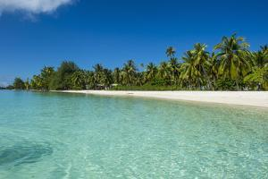 Beautiful palm fringed white sand beach in the turquoise waters of Tikehau, Tuamotus, French Polyne by Michael Runkel