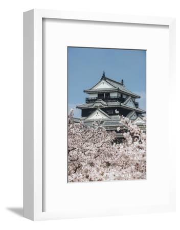 Cherry Blossom and the Matsuyama Castle, Shikoku, Japan, Asia