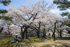 Cherry blossom in the Hakodate Park, Hakodate, Hokkaido, Japan, Asia by Michael Runkel