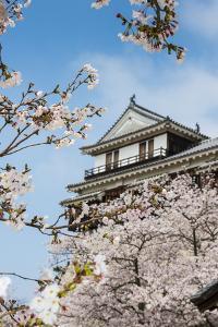 Cherry Blossom in the Matsuyama Castle, Shikoku, Japan, Asia by Michael Runkel