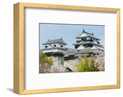 Cherry Blossom in the Matsuyama Castle, Shikoku, Japan, Asia
