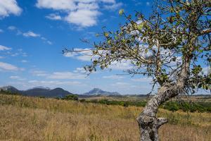 Chongoni Rock-Art Area, Malawi, Africa by Michael Runkel
