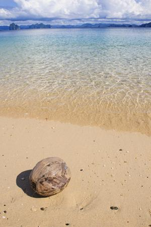 Coconut on a Sandy Beach in the Bacuit Archipelago, Palawan, Philippines by Michael Runkel