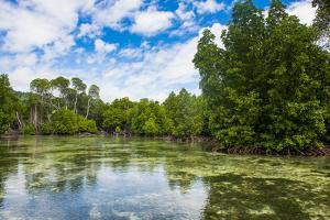 Crystal clear water in the Utwe lagoon, UNESCO Biosphere Reserve, Kosrae, Federated States of Micro by Michael Runkel
