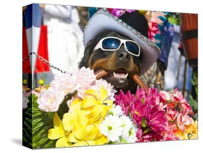 Dog Carrying Flowers at the Carnival in Funchal, Madeira, Portugal, Europe