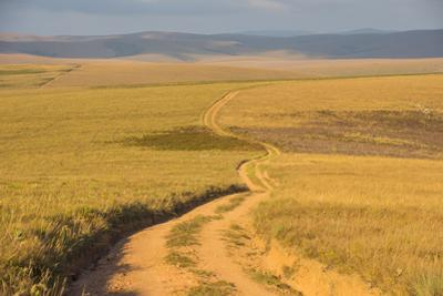 Dusty Road Leading Through the Nyika National Park, Malawi, Africa by Michael Runkel