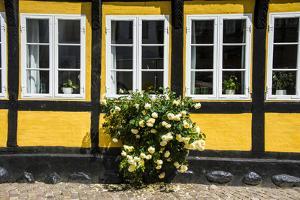 Flower Bush before a Historic House in Ribe, Denmark's Oldest Surviving City, Jutland, Denmark by Michael Runkel